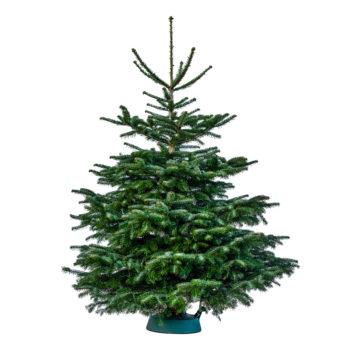 juletræ køb